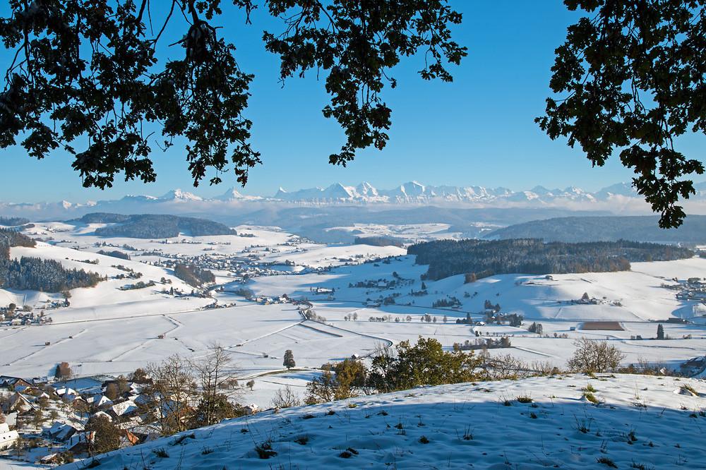 Sinnbild für den Oktober 2012: Grünes Eichenlaub vor Winterlandschaft - sonst nur mit Fotomontage machbar