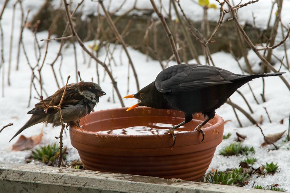 Nach dem heftigen Wintereinbruch war jeder flüssige Tropfen Wasser in der Natur hart umkämpft