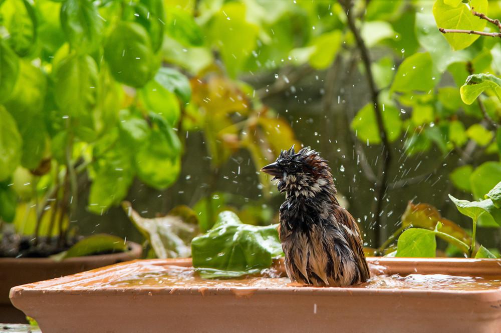 Sieben Wochen Badewetter: Die Vorsicht beim Optimismus war unnötig