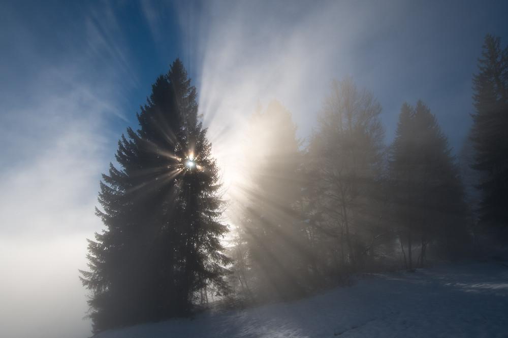 Auf 1280 m zeigt sich im Wald ein faszinierendes Schattenspiel