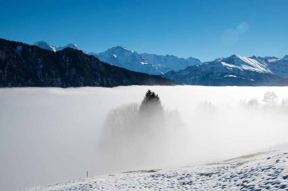 1300 m. Auf Augenhöhe mit der Nebelobergrenze erscheint diese recht glatt, was auf wenig Windbewegung schliessen lässt. Man achte auf die Baumgruppe im Vordergrund sowie auf das Hotel Harderkulm (1322 m), das sich am rechten Ende des dunklen Bergzugs vor Eiger, Mönch und Jungfrau knapp über dem Nebelmeer befindet.
