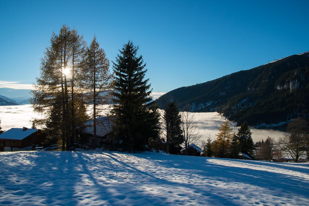 Beatenberg/Waldegg, 1330 m, 15:52 MEZ. Der Tag neigt sich allmählich dem Ende zu, die Nebelobergrenze scheint etwas abzusinken. Auffällig sind die immer noch mit gelben Nadeln behangenen Lärchen - immerhin haben wir Mitte November.
