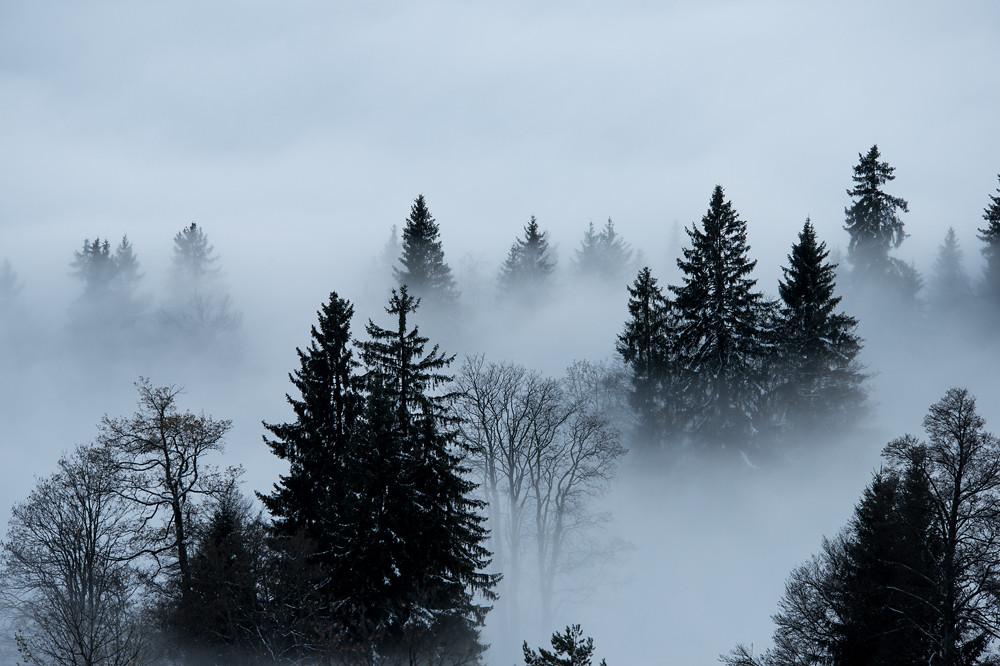 Nach Sonnenuntergang tauchen mit Schneeresten beladene Bäume aus dem Nebel auf - oberhalb der Nebelgrenze taute der Schnee hingegen an der Sonne weg.