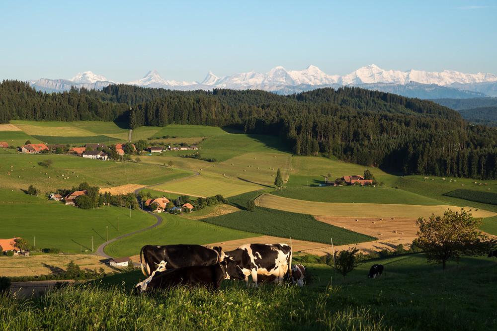 In diesem Monat so selten, dass es sich lohnt festzuhalten: Sonnig, heiss, aber nicht schwül mit blauen Himmel und guter Fernsicht. Emmental, 18.07.2014