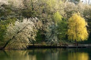Nach dem ersten warmen Frühlingsregen beginnt es erst richtig zu grünen