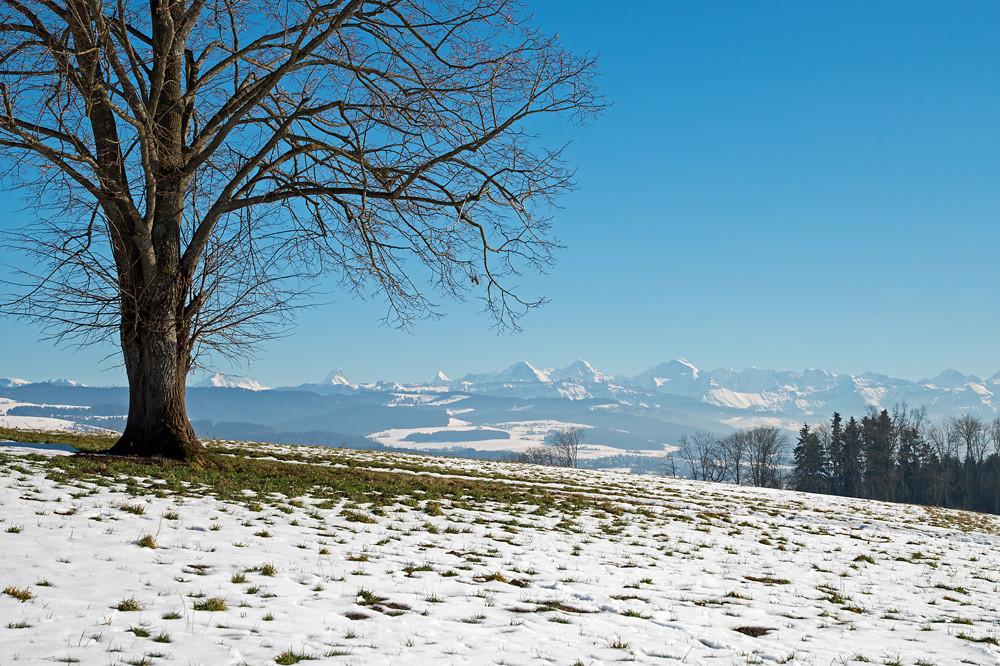 Während der Hochdruckphase im mittleren Monatsdrittel war die Frage Nebel oder Sonne oft eine Lotterie. Blick vom Aaretal südlich von Bern Richtung Berner Alpen, 12. Februar 2015