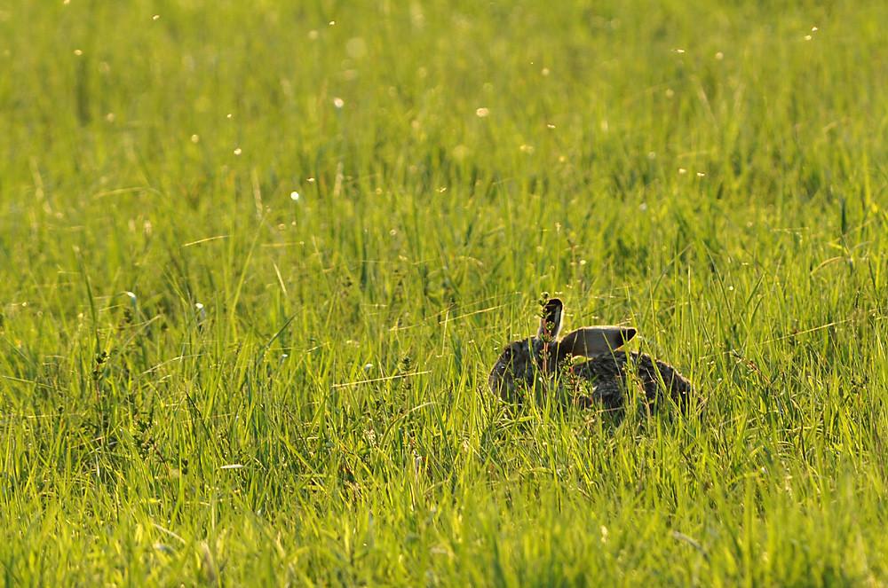 Ob der Osterhase auch in diesem Jahr grüne Wiesen antrifft?