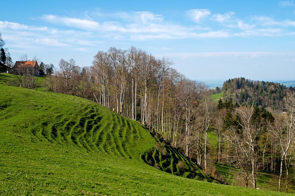 Blauer Himmel und frisches Grün waren im hochdruckdominierten April die bestimmenden Farben. Den ultimativen Schub erhielt die Vegetation allerdings erst mit der Regenphase zum Ende des Monats (Tössbergland, Ostschweiz 22.04.2015)
