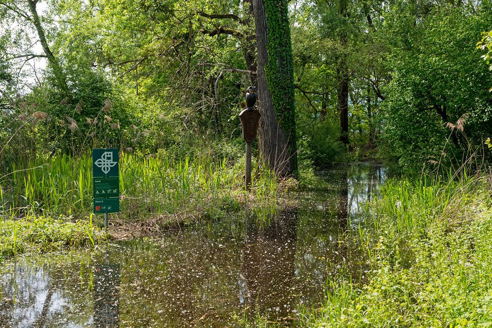 Für einmal ist hier auch für Naturbeobachter Schluss: Der Zugang zur Kernzone des Naturschutzgebiets Fanel steht teils hüfthoch unter Wasser.