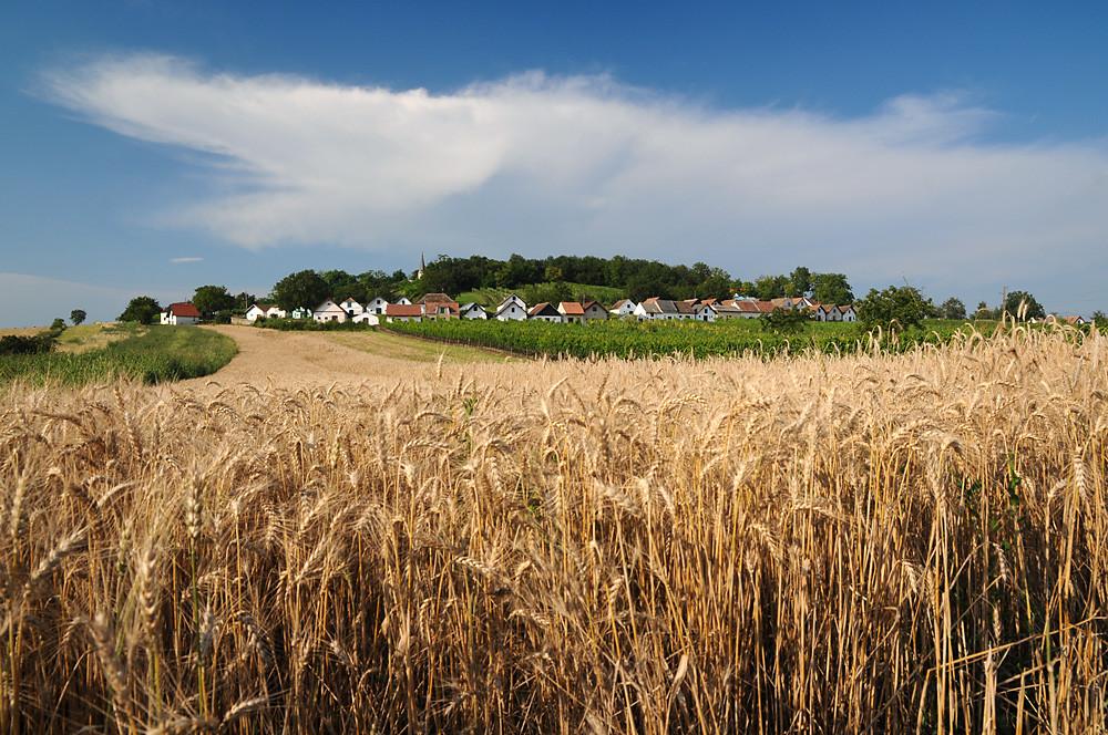 Könnten in diesem Sommer zum gewohnten Anblick werden: Ausgehungerte Gewitterambosse am Horizont