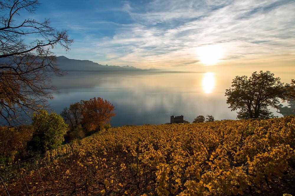 Wie gewohnt in den letzten Jahren (2012 war die Ausnahme) drehte der Goldene Oktober erst zum Ende richtig auf. Lavaux am Genfersee, 30.10.2015