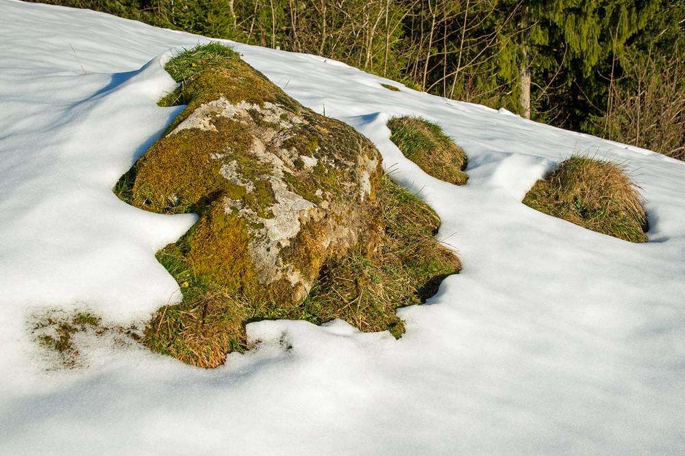 Anschauliches Beispiel von Anfang Dezember in 1200 m Höhe: Sobald ein Stück des Bodens freiliegt, wird die Schneemelze verstärkt. Der erwärmte Stein gibt Energie an die Umgebung ab. Nur ein Meter abseits davon liegt der Schnee trotz Südhanglage noch knietief.