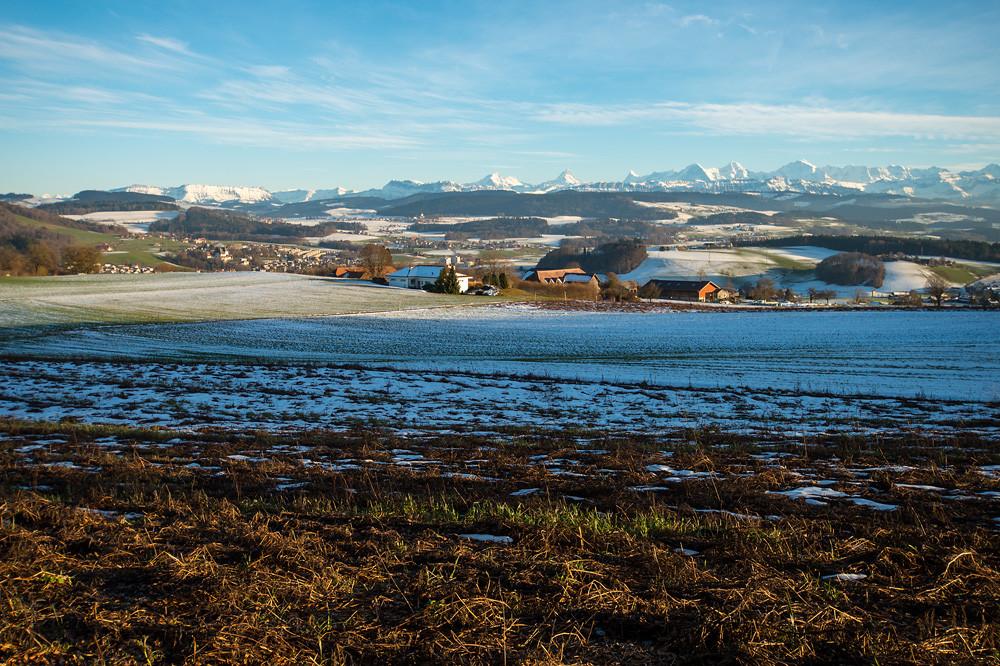 Eine Woche Winter, das war's dann auch schon wieder: Tauwetter am Dentenberg (700 m), Worb bei Bern, 25.01.2016