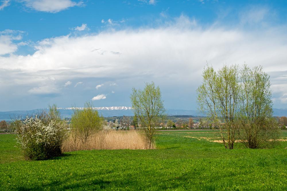 Am 12. April war die Frühlingswelt noch in Ordnung: Im Berner Seeland beginnt die Blüte der Obstbäume, der Südhang des 1600 m hohen Chasseral ist weitgehend ausgeapert und darüber thront eine frühsommerliche Gewitterwolke