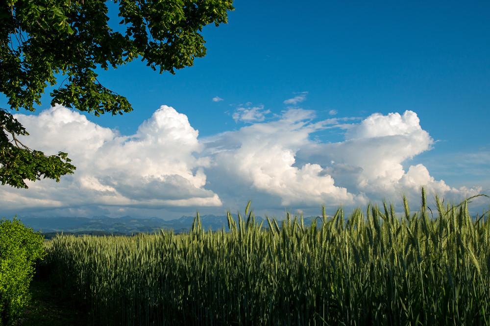 Der Juni stellte die Nerven mancher Freilicht-Veranstalter wie auch jene der beratenden Meteorologen auf die Probe. Hier ein Tag, an dem die Gewitter mal keine Unwetter-Ausmasse annahmen (6. Juni)