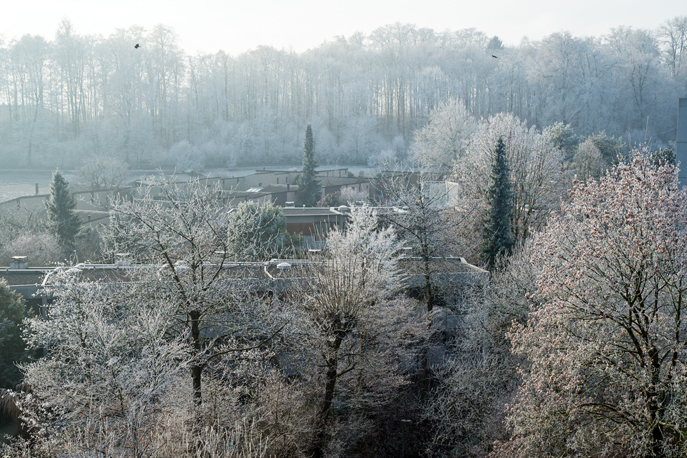 Verreifte Landschaft in Muri bei Bern am 17.12.2016. Wobei das Datum unerheblich ist: Mit Ausnahme der Weihnachtstage zeigte der Blick aus dem Fenster den ganzen Monat über dasselbe Bild. Spannend war einzig die Frage, zu welcher Tageszeit sich der Nebel lichten möge.